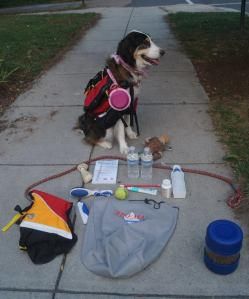 Preparedness Dog