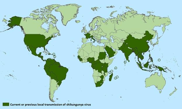 Chikungunya Distribution