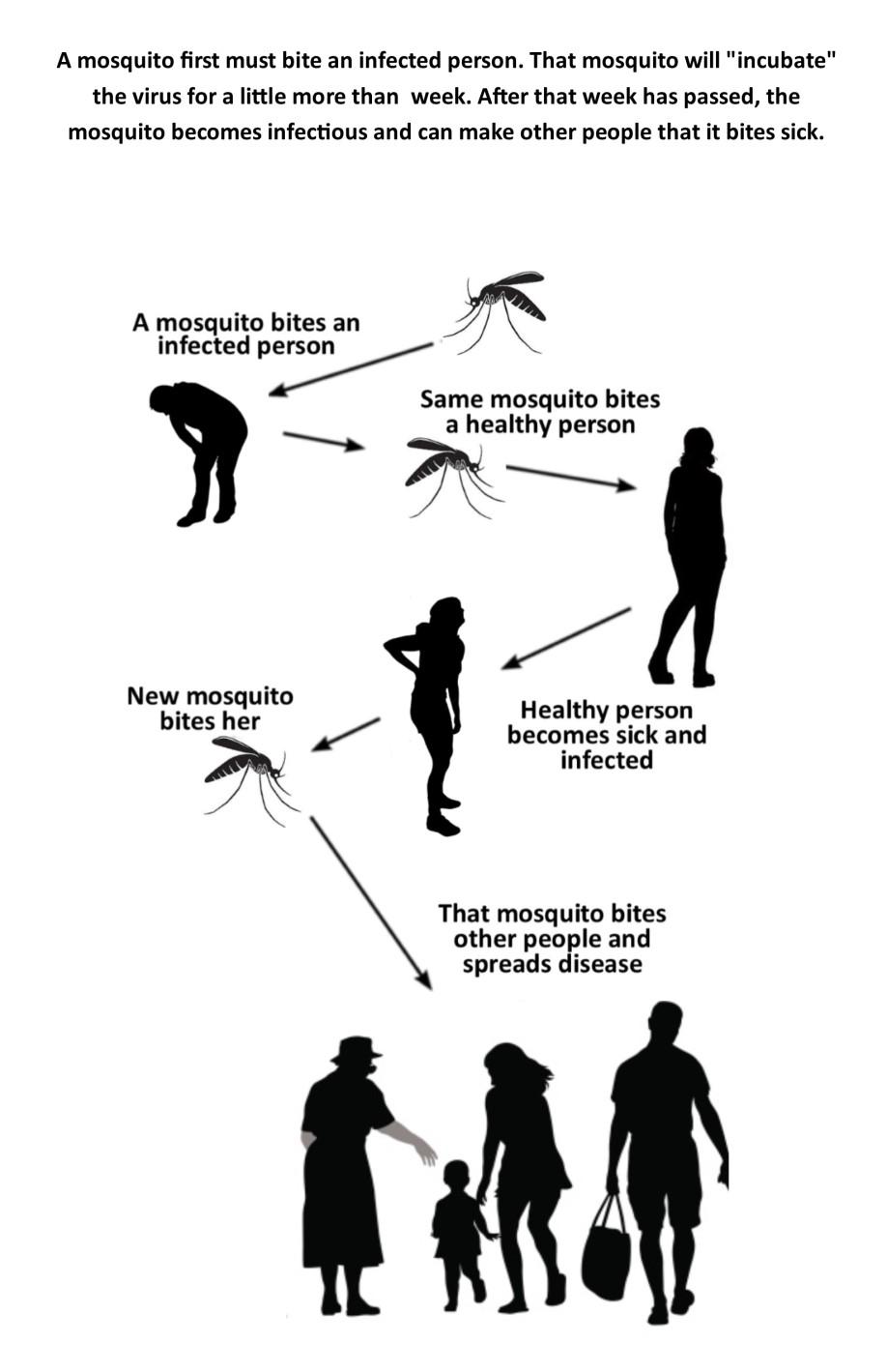 Zika transmisson